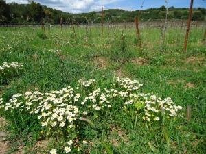 Primeira fotogarfia publicada no artigo La Cour des vins de Provence