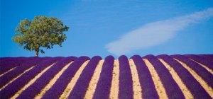 Primeira fotogarfia publicada no artigo As Famosas Ervas de Provence - Cesar Yukio